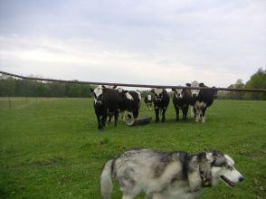 Maja Herding