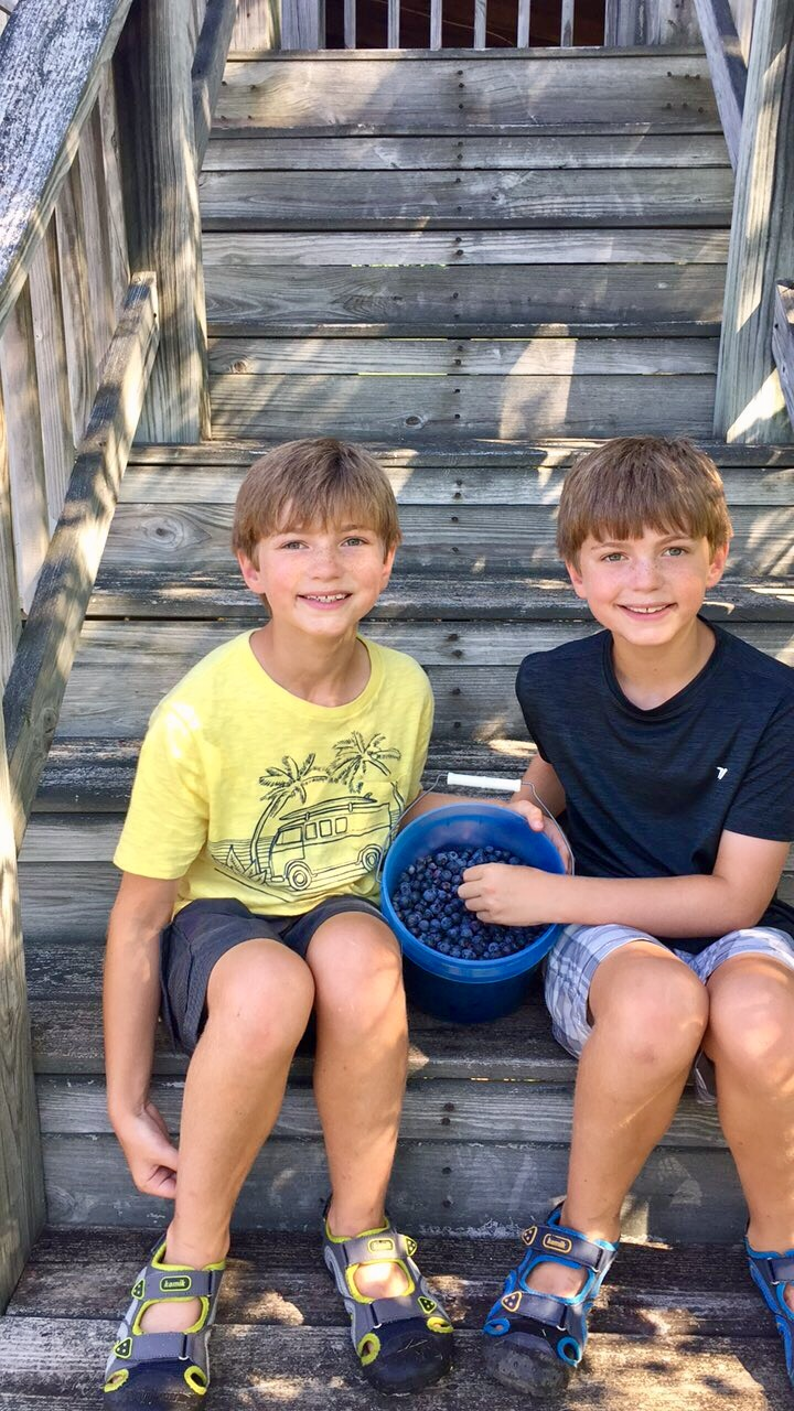 Blueberry picking farm Where to go, What to do in Nashville for Family Fun from Spinach Tiger