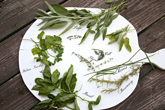 Walnut Pesto Sauce with Seven Herbs by angela roberts