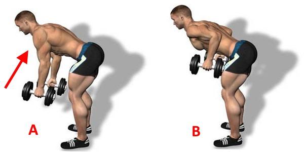 Latihan untuk bahagian belakang adalah penting apabila kelengkungan tulang belakang dan perubahan dystrophik degeneratif di dalamnya
