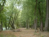 picnic grounds between C&O and Potomac