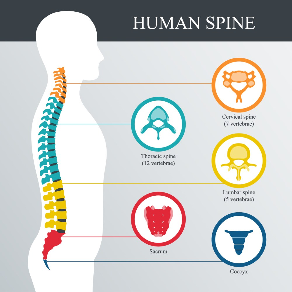 medium resolution of what are the symptoms of a spinal fracture