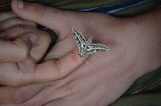 31_A_Moth