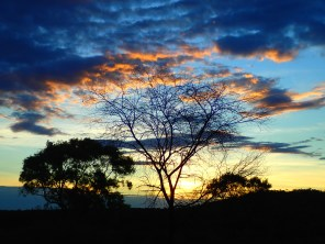 The clouds form the leaves of this dead tree as the sunsets on another day. Photo Ian Rossini.