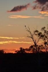 31_Falcon_sunset
