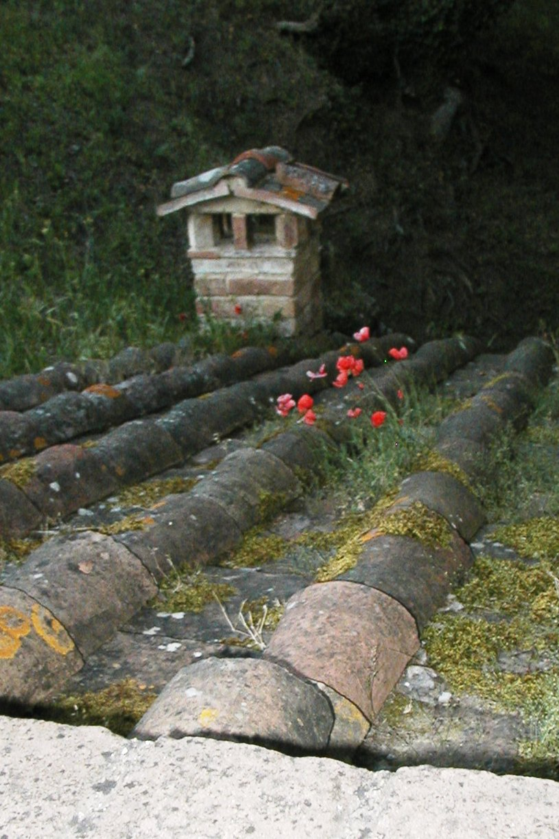 poppies on the roof