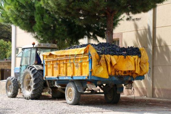 grape truck