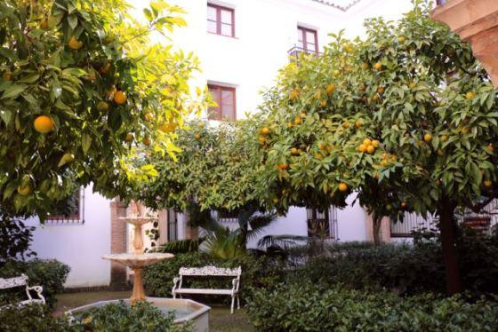 Leida's courtyard