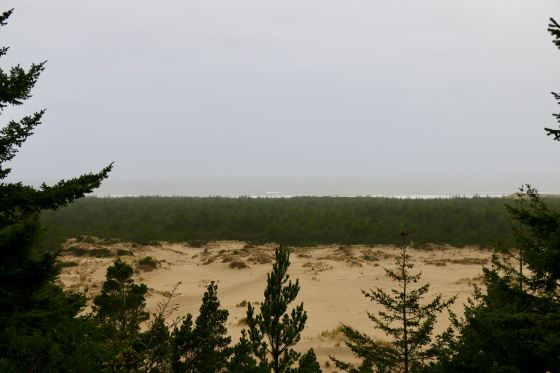 forest, dune, forest, ocean