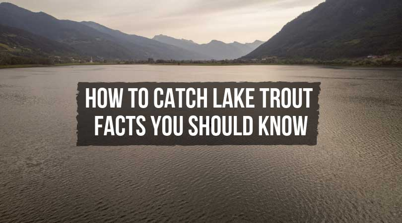 How to Catch Lake Trout–Facts You Should Know