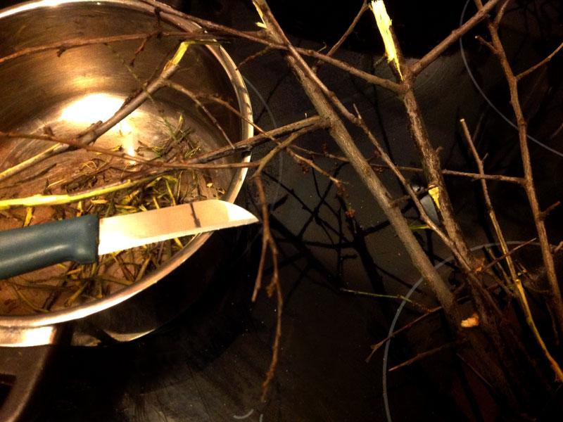 Zweige der Schlehen schälen