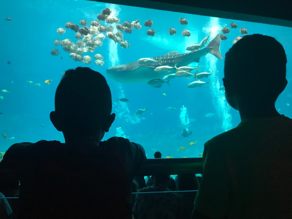 12 Wheelchair Accessible Family Friendly Things to Do in Atlanta