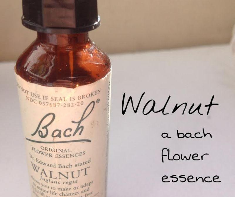 Walnut Flower Essence Affirmation   Best Flower Site