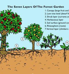 forest garden page1 [ 1024 x 780 Pixel ]