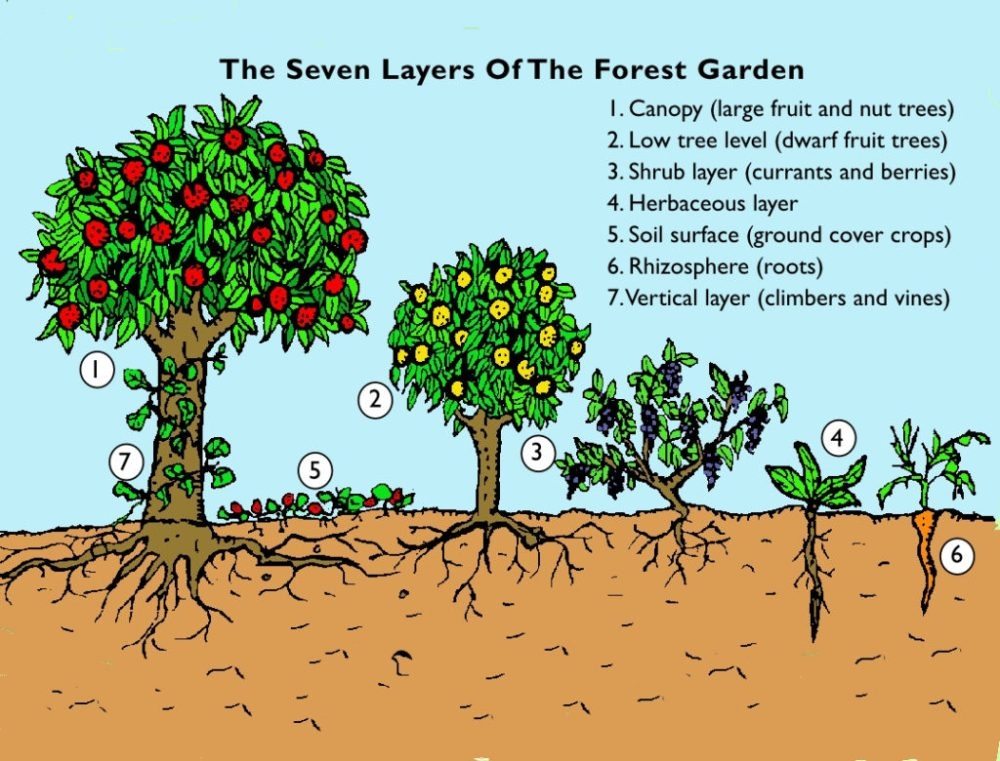 medium resolution of forest garden page1