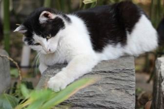 kitty-5169596_1920
