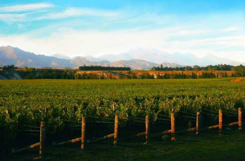 Taylor's Pass Vineyard - Marlborough