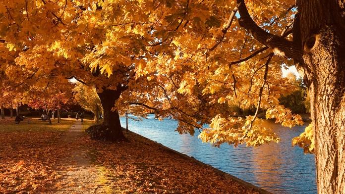 Fall Spirits