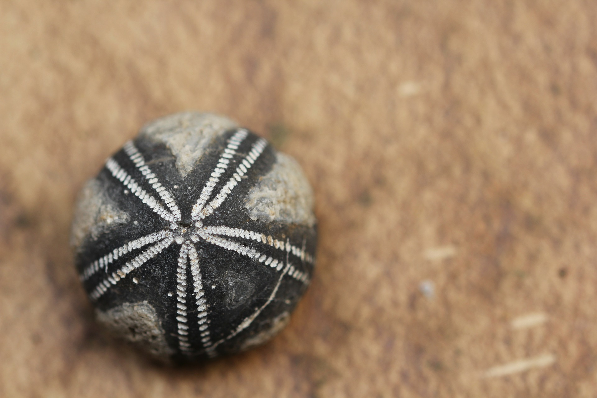 fossil-111499_1920