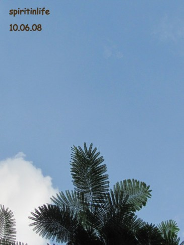 delhi-ashram-nature-photos-117