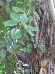 ashram-flowers-172