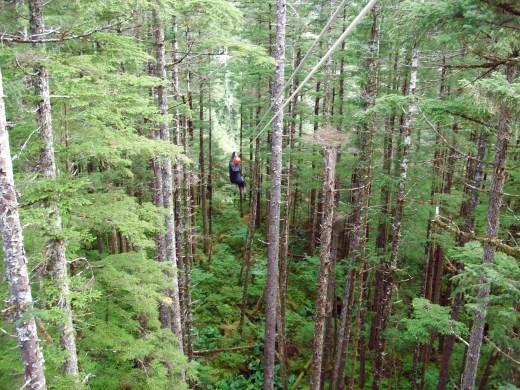 Zip lining in Juneau Rainforest Canopy in Alaska