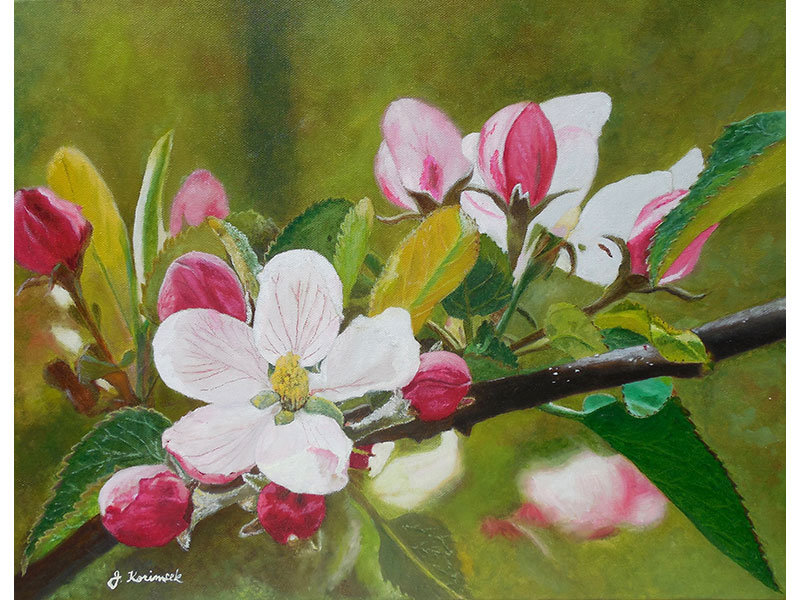 "Apple Blossoms 14""x18"" by Josie Korimsek"