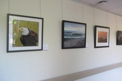 Pat Calder's Vancouver Island's Eagle