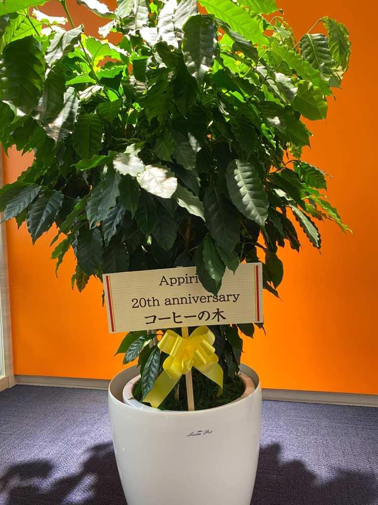 【祝20周年!】記念樹に込められた思いとは?