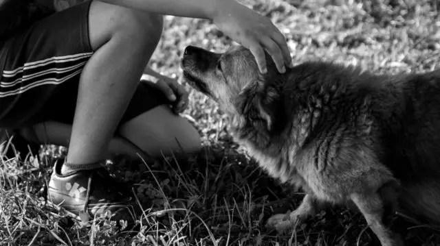 犬と遊ぶ少年