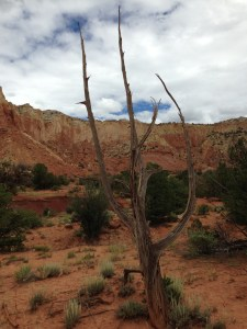 Forlorn tree