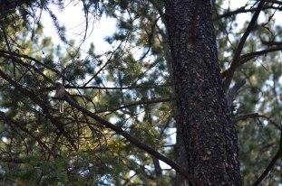 2012-8-Bird-in-Tree