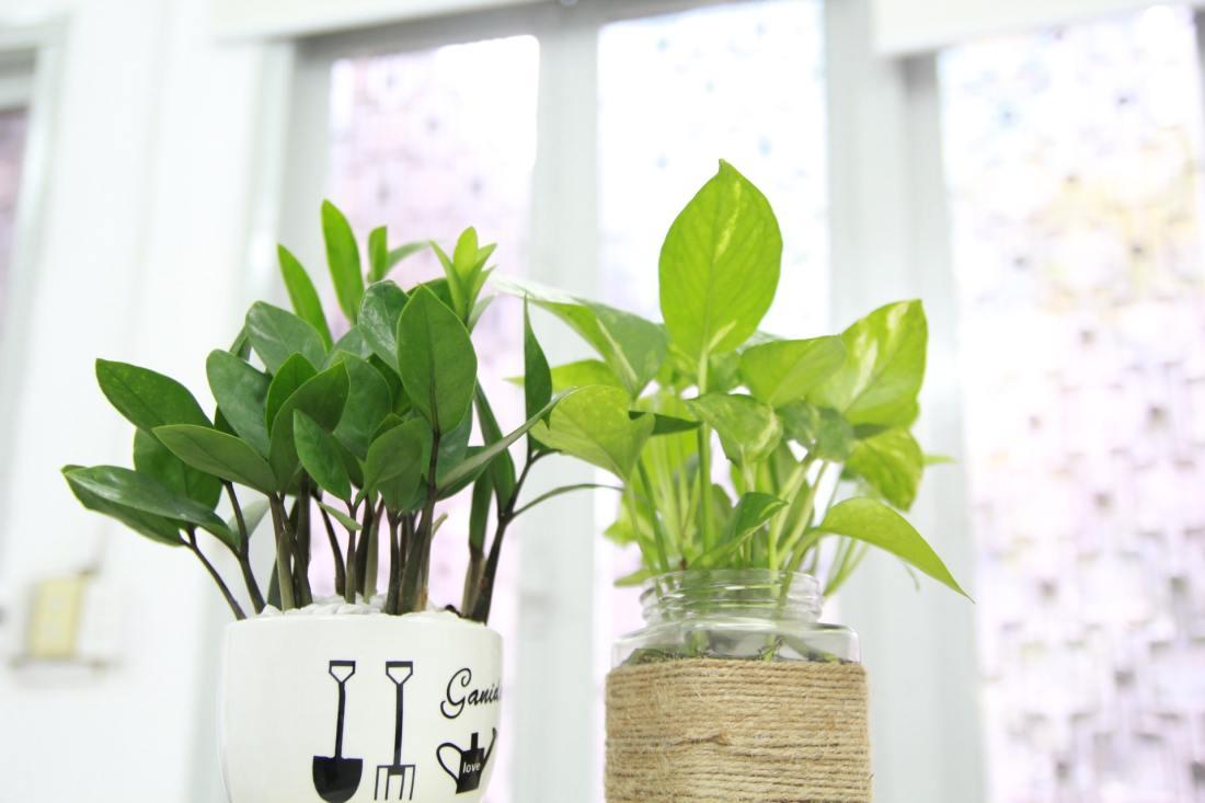 potten in plant
