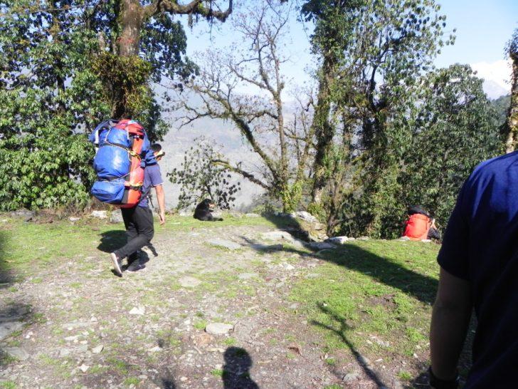 登山客の荷物を運ぶシェルパーさんと犬