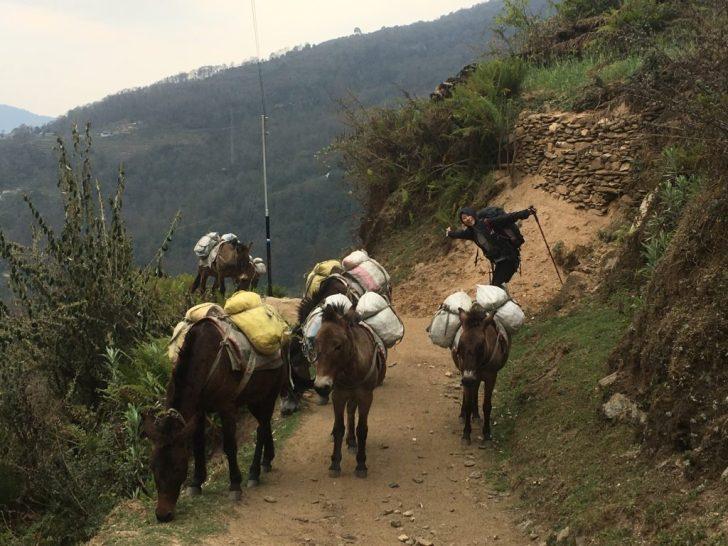 ロバたちが荷物を運ぶ
