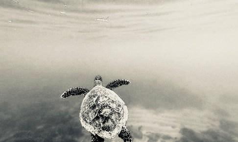 Gili Menoで見たウミガメ