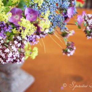 Bouquet-fleur-campagne-4-spiritus-naturae