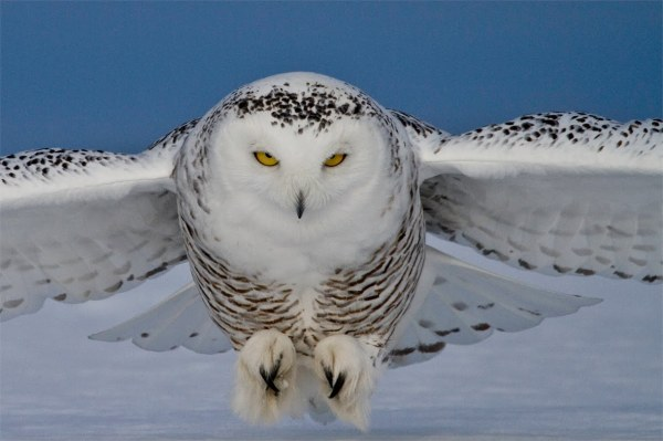 Spirit Wings Journey