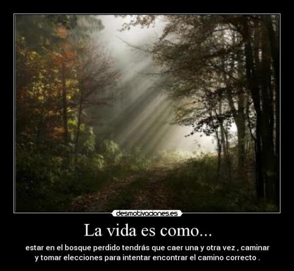 nuevos caminos perdidos en el bosque