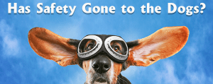 Has Safety Gone to the Dogs?