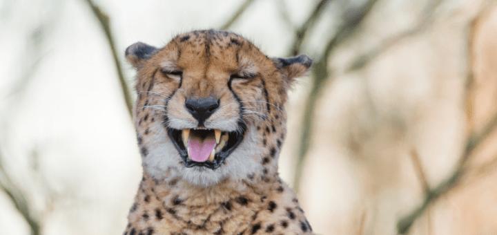 laughling internet - spisek pisarzy