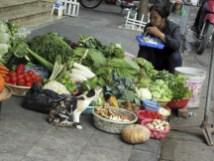 vegetable stall (avec un chat)