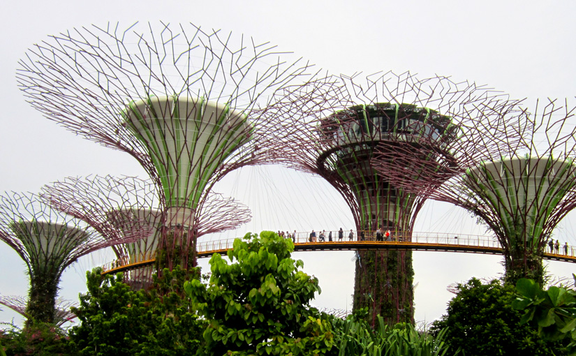Visit to Gardens by the Bay Supertrees and OCBC Skyway