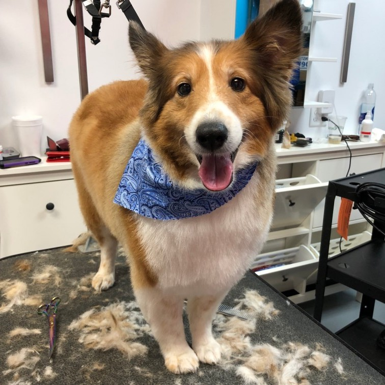 Splash and Dash Groomerie  Boutique  Dog Grooming Baton Rouge LA  Splash and Dash For Dogs