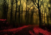 35 Breathtaking Forest Wallpaper Designs