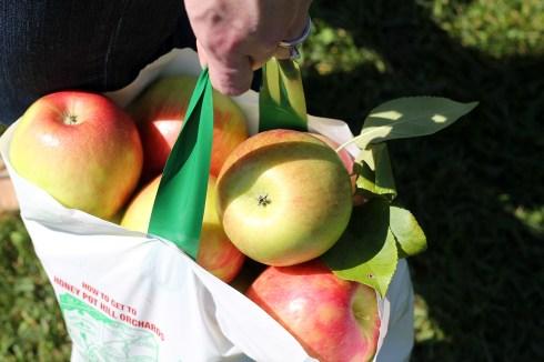 Apple Picking 2
