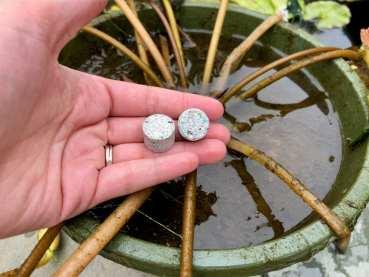 Waterlily Fertilizer Tabs