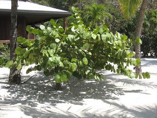 Botany of the BVI's