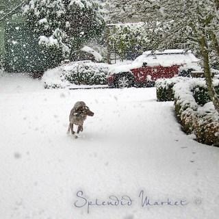 bonne neige!