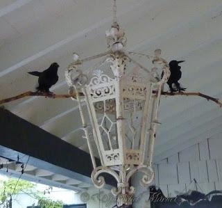 birds and bats
